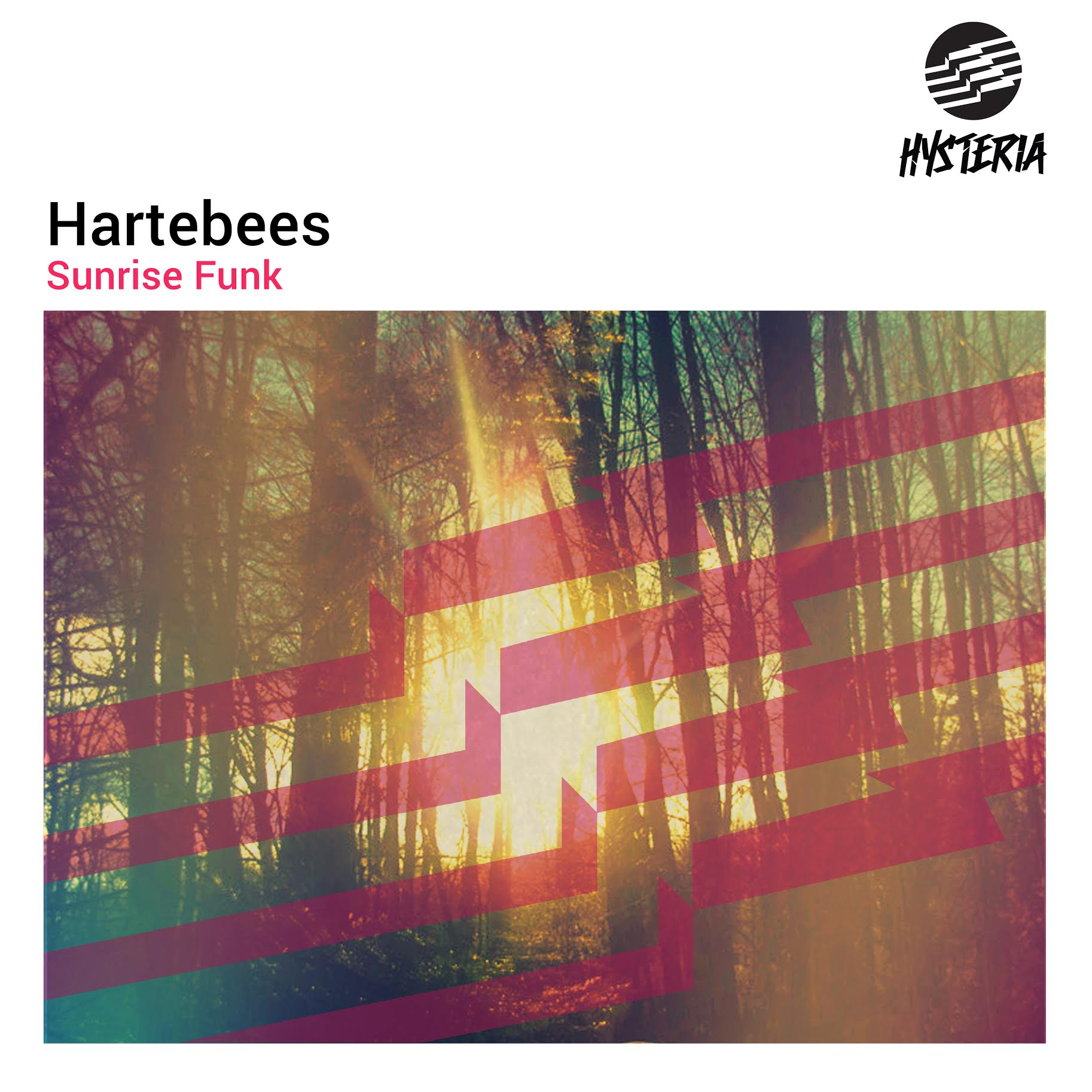 [EDM Assassin Exclusive] Interview With Hartebees
